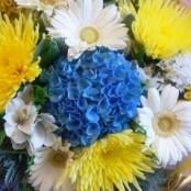 White Blue Yellow